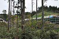 20135_363