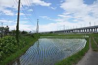 20146_62